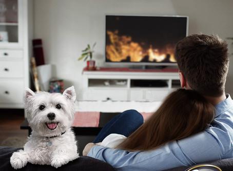 Un perrito también puede ser feliz y mantenerse activo en espacios pequeños.