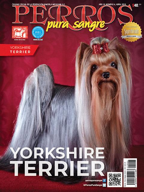 Revista Perros Pura Sangre YorkshireTerrier