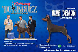 dom_blue.jpg