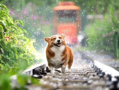 Cómo prevenir enfermedades en tu mascota en época de lluvias