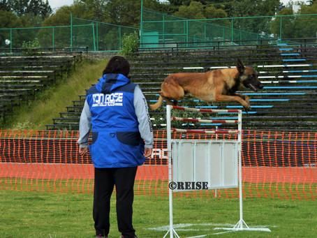 La élite del deporte... el perro top del deporte canino y su selección