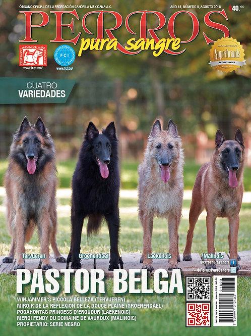 Pastor Belga. Agosto 2018