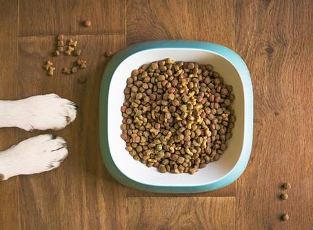 ¿Por qué los perros comen croquetas?