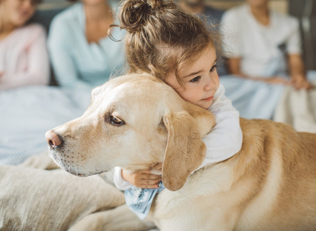 Causas de enfermedades cardiacas comunes en perros y cómo identificarlas