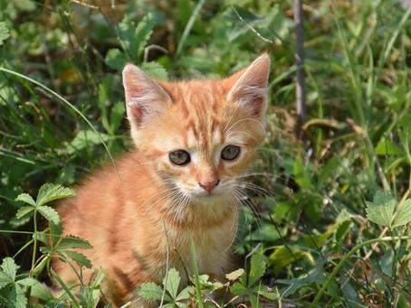¿Cómo criar correctamente a tu gatito?