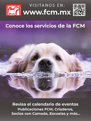 webfcm.jpg
