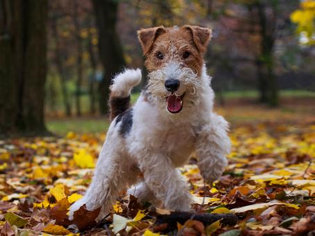 Mascotas, las mejores para reducir el estrés