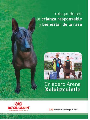 Xolo_lupita.jpg