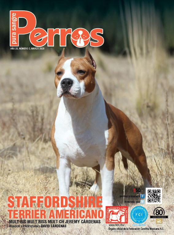 Staffordshire Terrier Americano