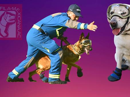 Los increíbles Héroes Caninos