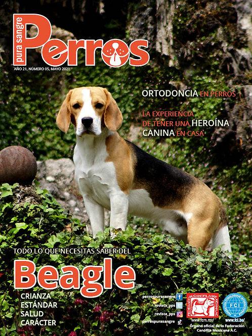Beagle. Mayo 2021