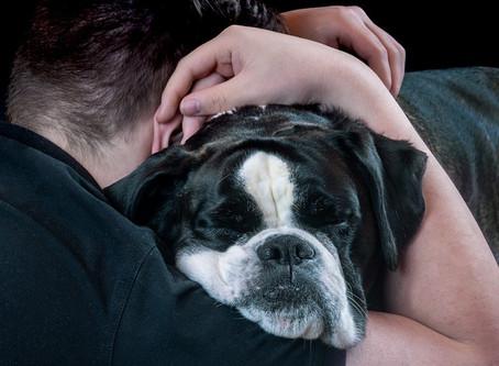 Ventajas de adoptar un perro de talla grande
