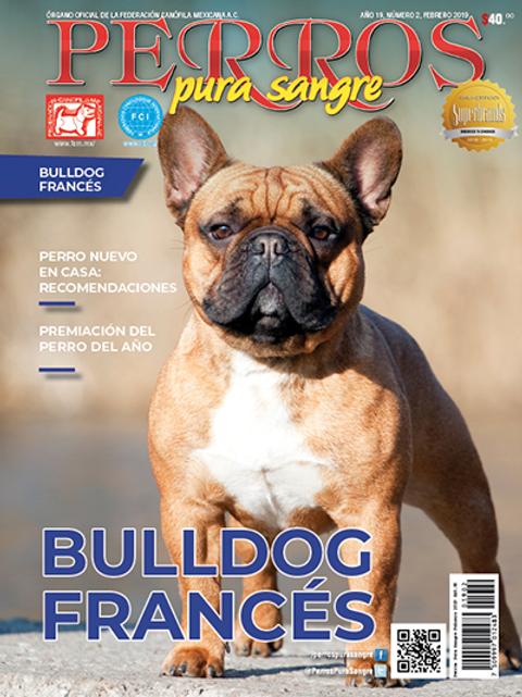 Revista Perros Pura Sangre BulldogFrancés