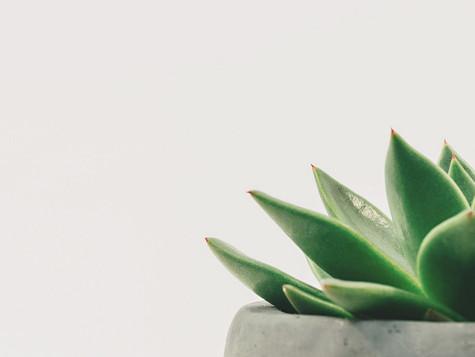 Le pouvoir des plantes d'intérieur