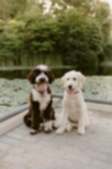 Bella & Luna - DanicaOlivaPetPhotography
