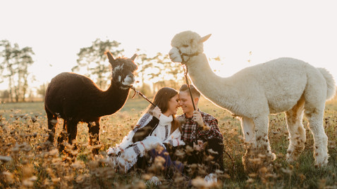 Brandi & Carley's Engagement Session at the Alpaca Farm | Danica Oliva Photography
