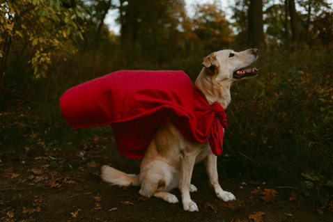 Pet Adventure Photography Session  |  Superhero Valentina