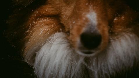 Outdoor Snowfall Dog Session | High Park Toronto