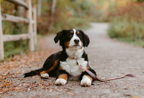 My Favourite Pet Poses for your Next Pet Photoshoot | Danica Oliva Dog Photography