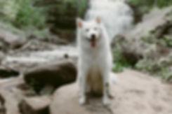 Toronto Dog Photographer, Dog Photos, Toronto Dogs,