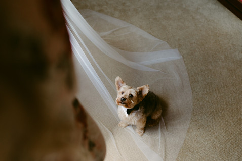 4 Ways to Have your Pupper be a part of your Wedding Day