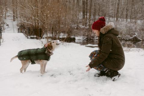 Maples High Park Snowy Adventure  |  Toronto Dog Photographer