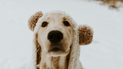 Winter Snowfall High Park Dog Session | Riley the Golden Doodle