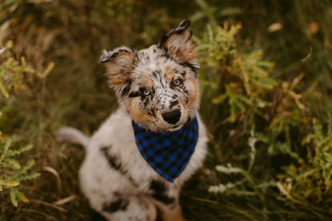 Toronto Fall Dog Session at Evergreen Brickworks | Danica Oliva Pet Photography