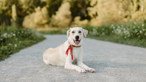 Josie's Pet Session at Evergreen Brickworks | Danica Oliva Photography