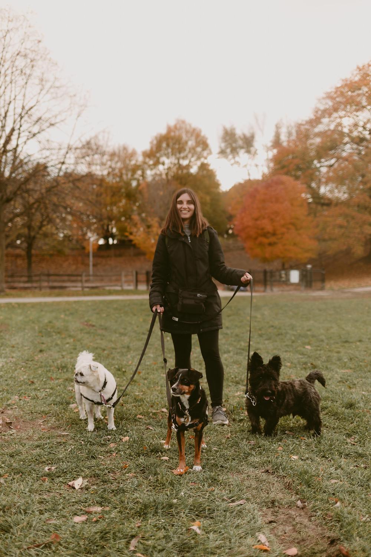TORONTO DOG WALKER | TORONTO PET PHOTOGRAPHER | DANICA OLIVA PHOTOGRAPHY