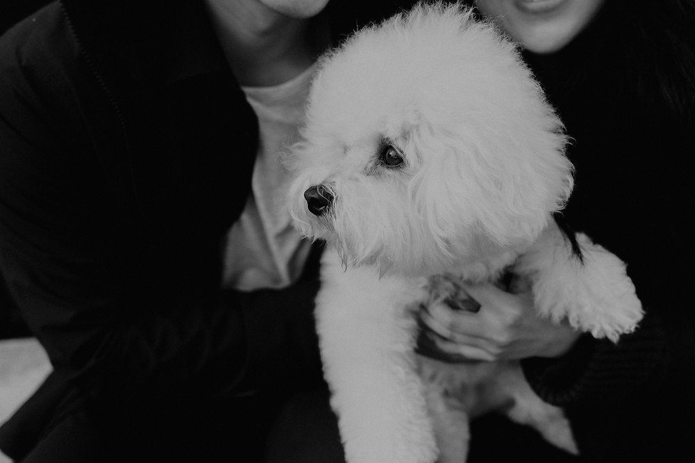 OUTDOOR DOG PHOTOGRAPHY | TORONTO PET PHOTOGRAPHER | DANICA OLIVA PHOTOGRAPHY