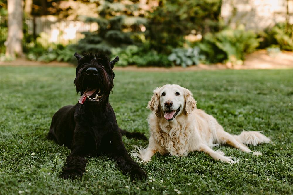 Toronto Dog Photographer, Ontario Pet Photographer, Dogs of Toronto, Ontario Photographer,