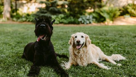 Content Creator for Canadian Pet Businesses | Ontario Pet Photographer | Danica Oliva Photography