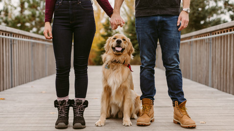 Trillium Park Dog Session with Bear | Danica Oliva Toronto Dog Photographer