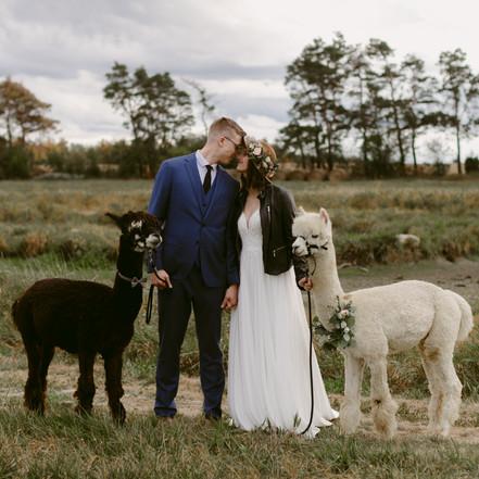 Ontario Alpaca Farm Elopement | Danica Oliva Photography