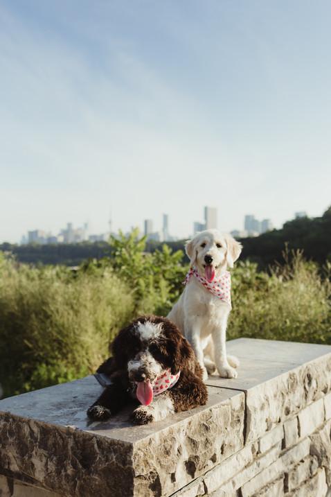 Evergreen Brickworks Pet Photography Session  |  Luna & Bella