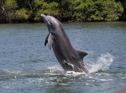 Puerto el Morro Dolphins