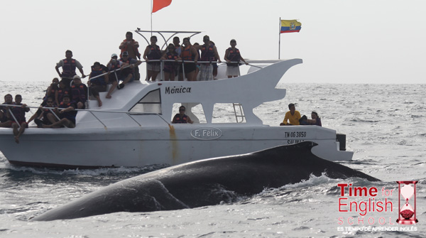 Whalewatching 10 2012