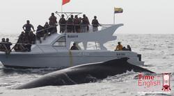 Whalewatching 10 2012
