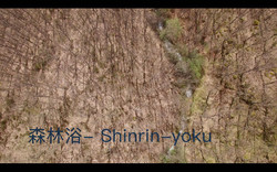 森林浴 Shinrin Yoku by Drone