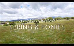 Spring & Ponies