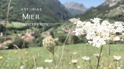 Asturias Mier