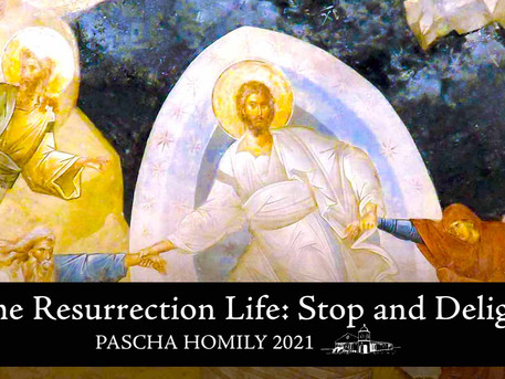 Resurrection Life: Stop and Delight