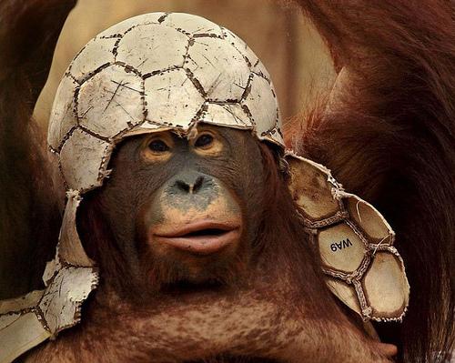 Funny_Soccer_Monkey.jpg