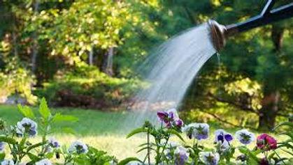 watering.jpeg