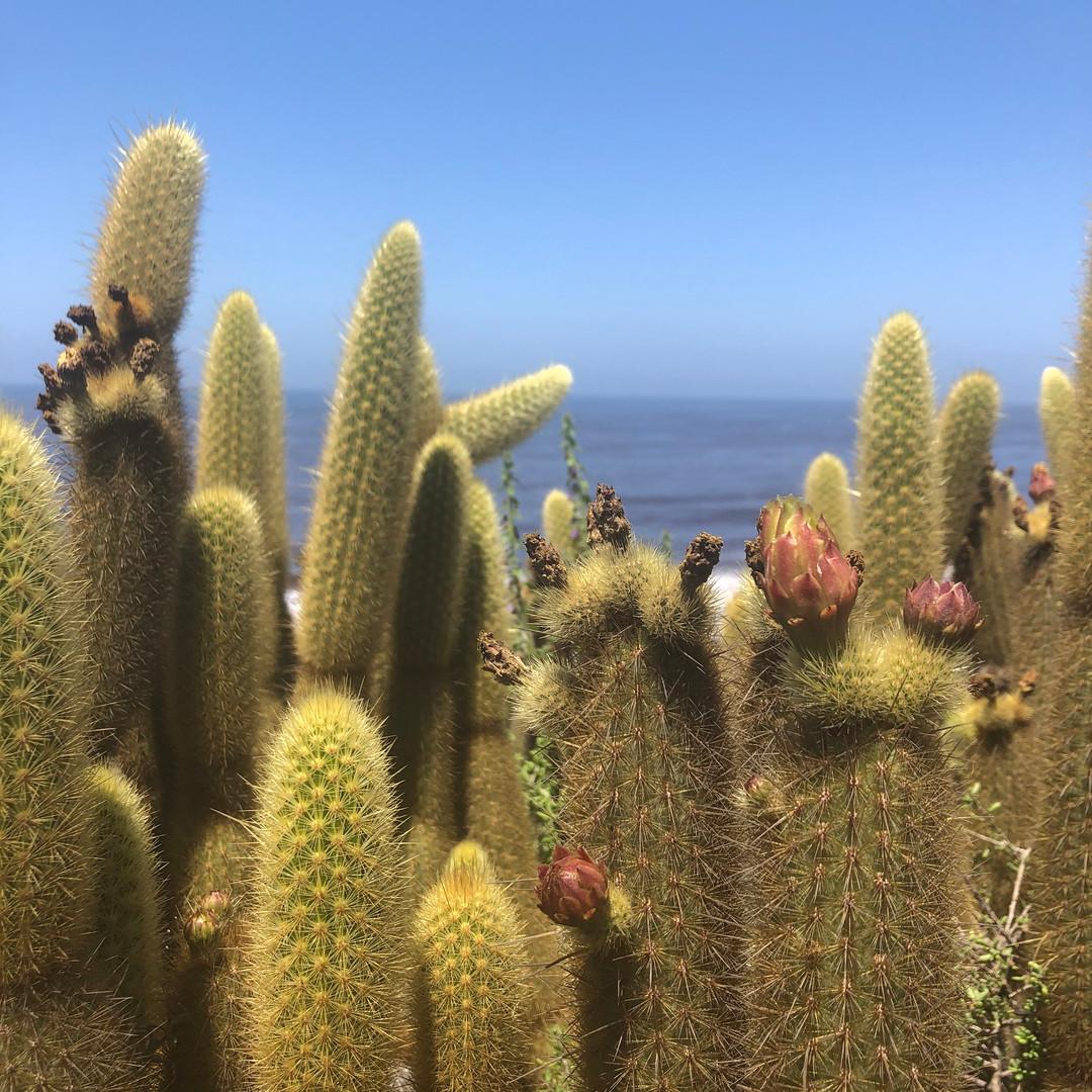 cactus-baja-lg.jpg