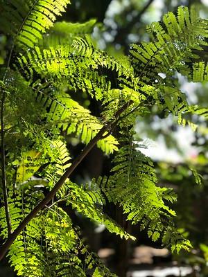 tijuana-parks-plants-sunlight-breezy.jpg