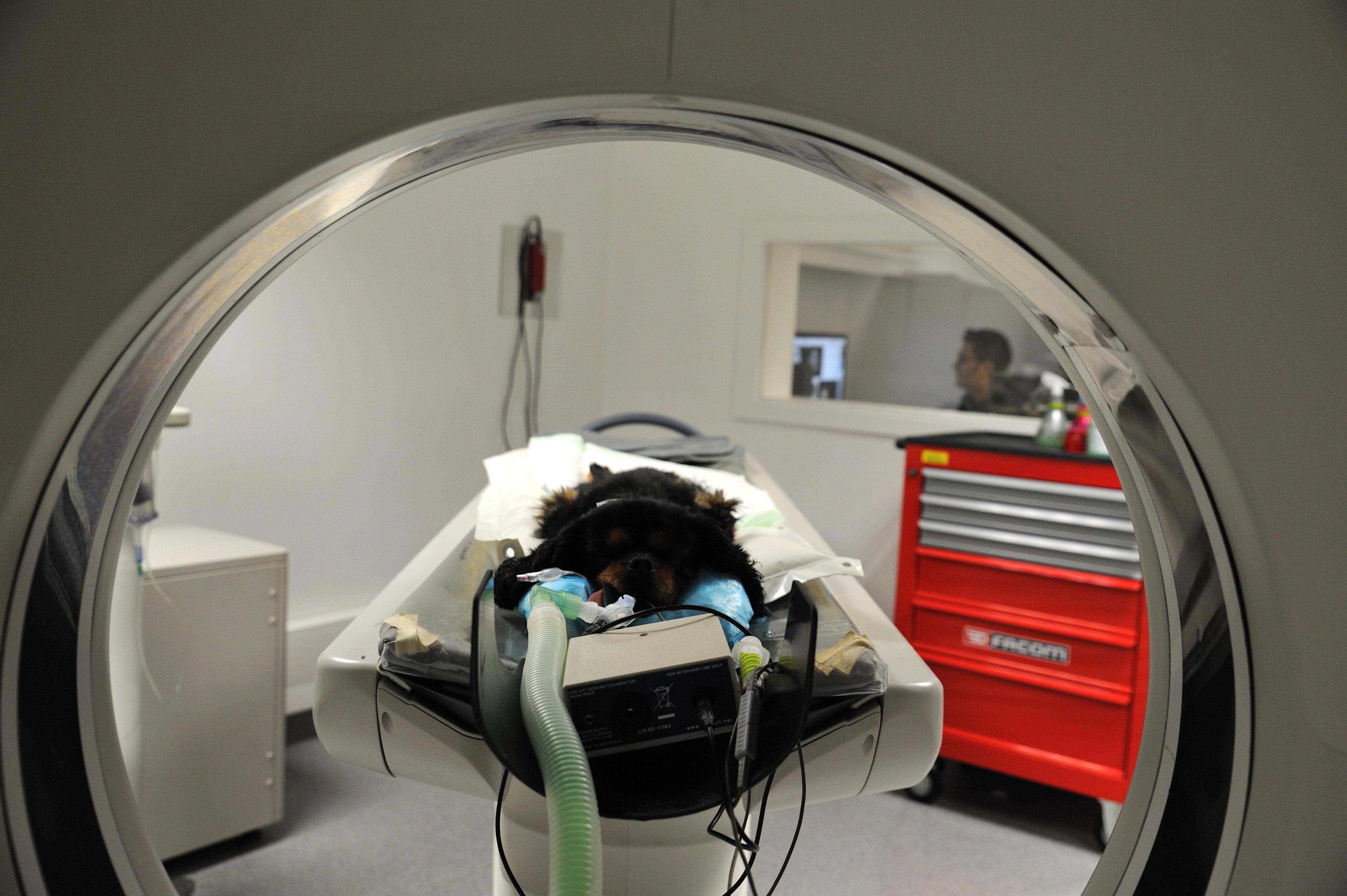 scanner chien otite dermatologie
