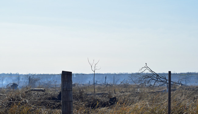 Illegal deforestation - picture taken quickly so as to not attract attention