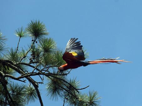 Team Parrot in La Moskitia, Honduras